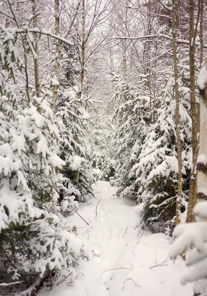 Path to sugarbush