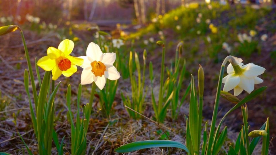Spring update!