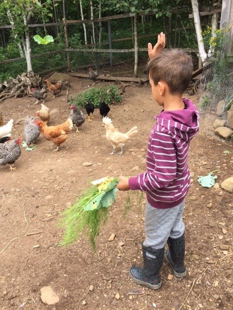 Noam feeding the chickens