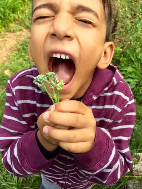 Noam trying fresh-picked broccoli for the first time
