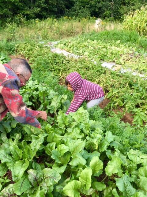 Papa and son picking beets