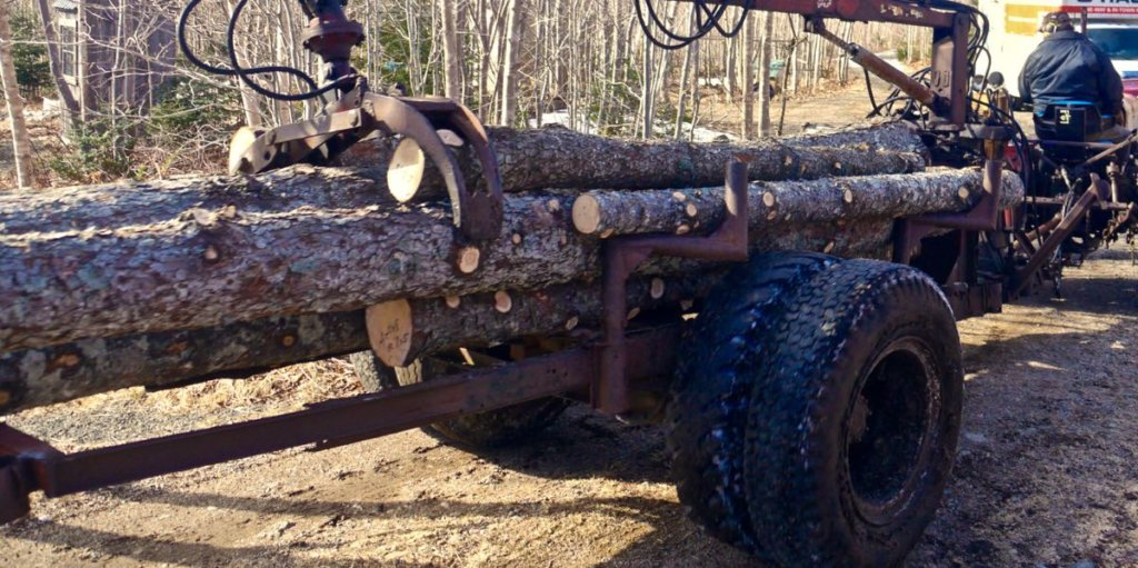 Wesley hauls timber logs out of the forest