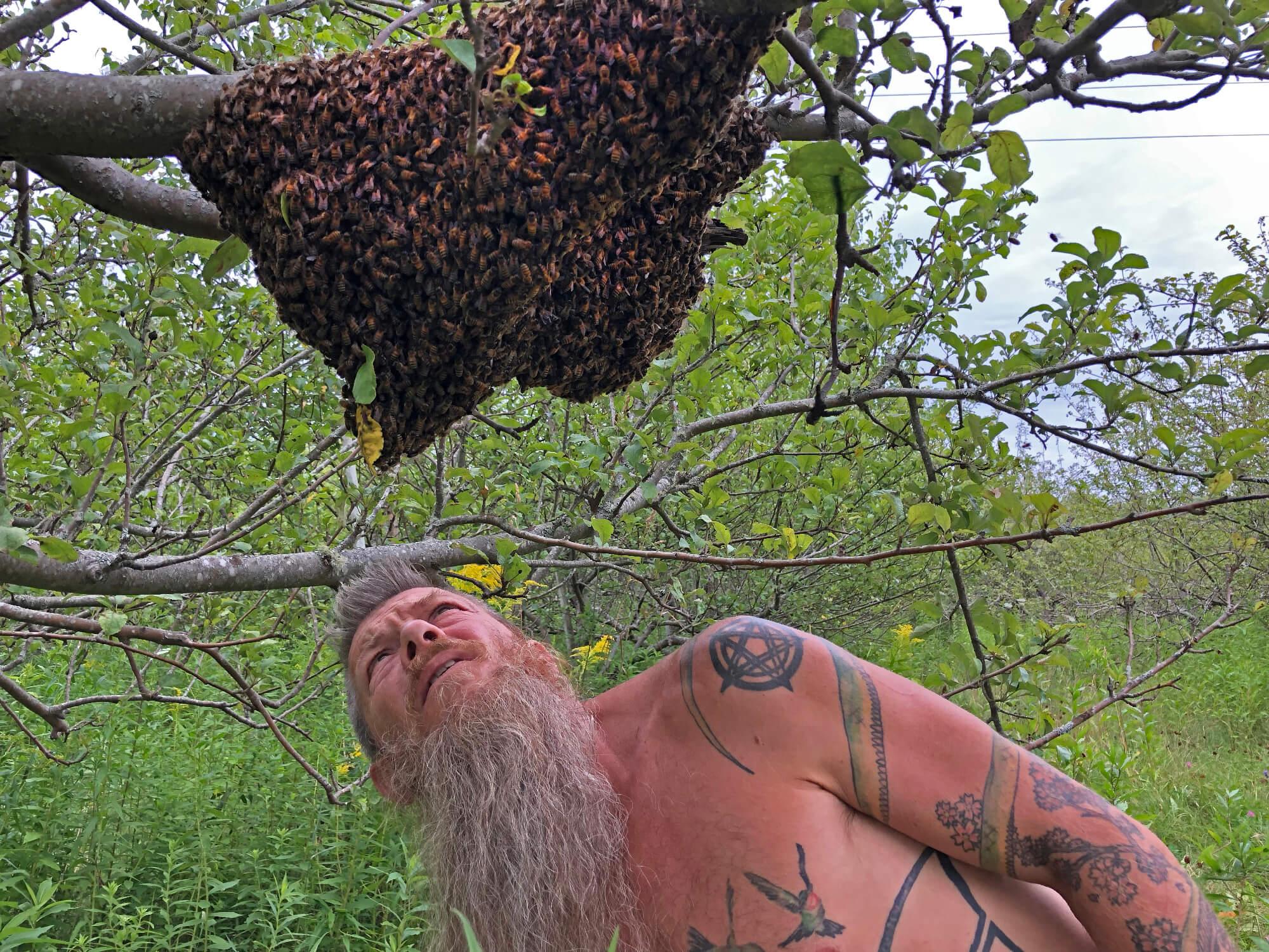Examining the swarm